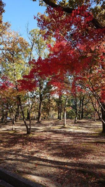 紅葉の写真①