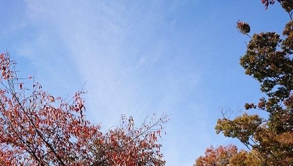 紅葉のサムネイル