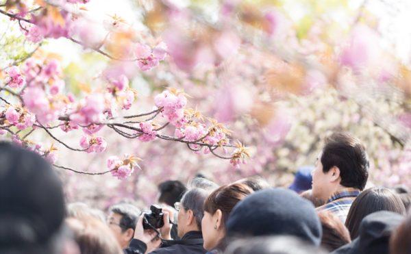 花見の画像